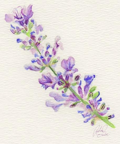 LavenderWatercolor
