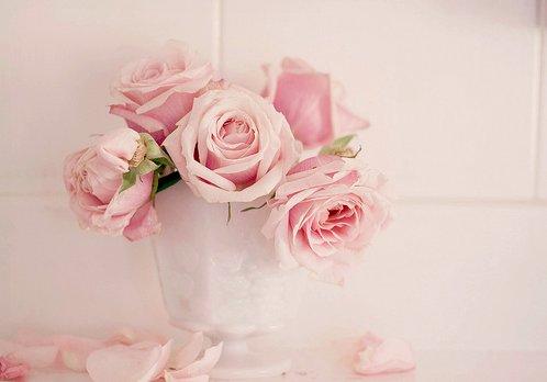 flower-flowers-pink-rose-Favim.com-609631